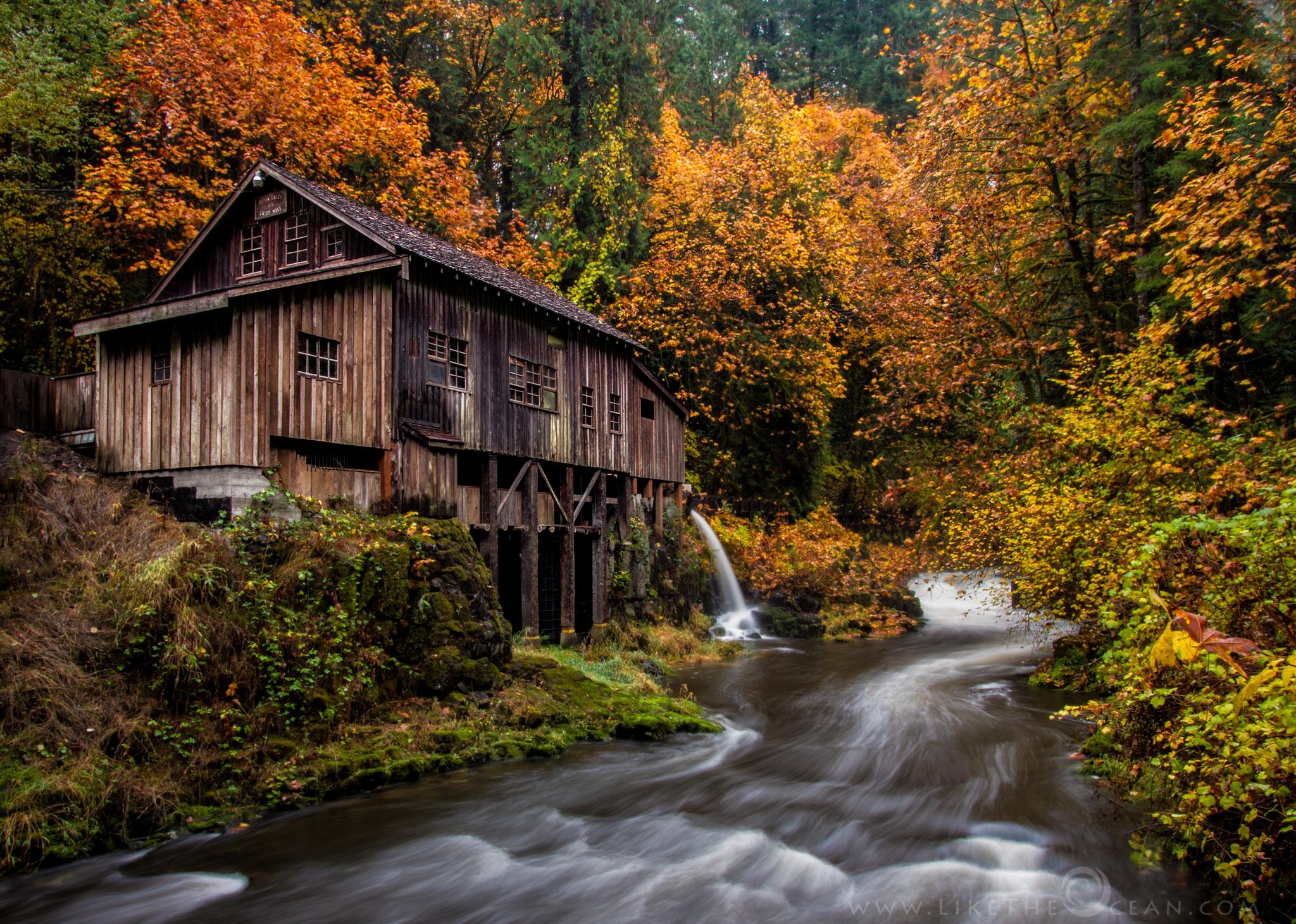 Reviews like the ocean for The cedar mill